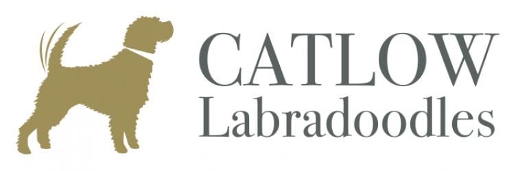 Catlow Labradoodles